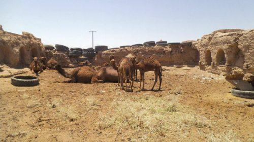 Caravasar en el desierto de Lut, entre Yazd e Isfahán.